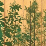 Right Screen: Trees, Master of I'nen seal, Sotatsu school, Japan, mid-1600s, pair of six-panel folding screens, ink, colour and gold on paper, 154 x 357.8 cm (each), Freer Gallery of Art