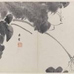 Lotus by Bada Shanren (Zhu Da), Qing dynasty, circa 1665, album (8 leaves), ink on paper, 25.4 x 33.6 cm