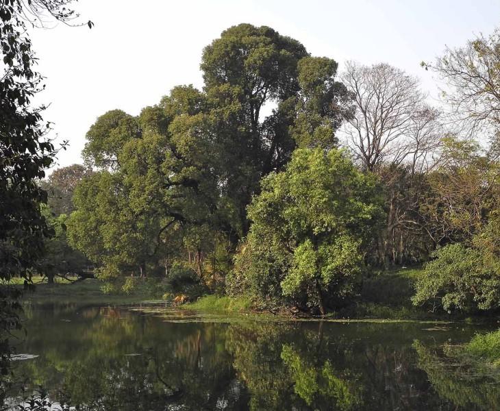 Kolkata's Historic Botanic Garden