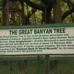 Information on the great banyan tree