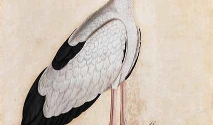 Asian Openbill Stork in a Landscape, unknown artist, Lucknow, circa 1780, watercolour on paper, 63.5 x 47 cm. Courtesy Private Collection