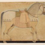 FORGE lynch Kishangarh-stallion